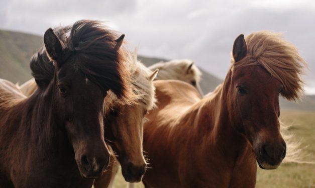 Beste Boeken Over Paarden [Informatief & Leuk]