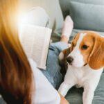 Top 10 beste boeken over honden als huisdier